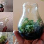 Интериорно озеленяване