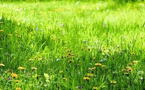4 Преоткриване на поляната
