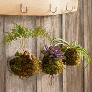 9 Новите стайни растения 2